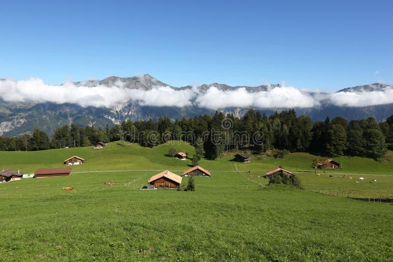 Krajobraz w alps w Bernese Oberland, Szwajcaria zdjęcia royalty free
