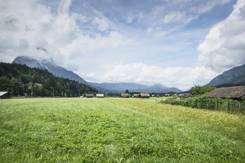 Krajobraz w Alps z świeżymi zielonymi łąkami, kwitnienie kwiatami i snowcapped halnymi wierzchołkami w tle obraz royalty free