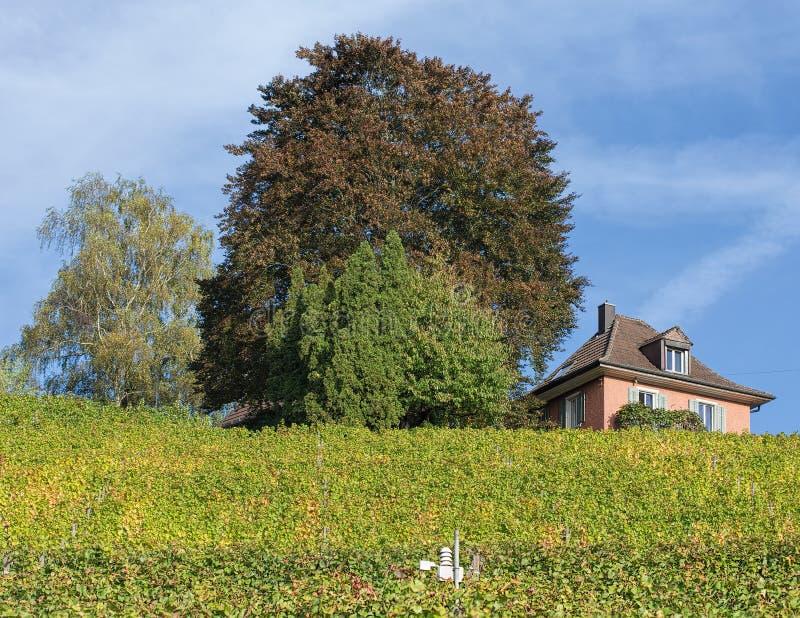 Krajobraz w Baden, Szwajcaria obraz stock