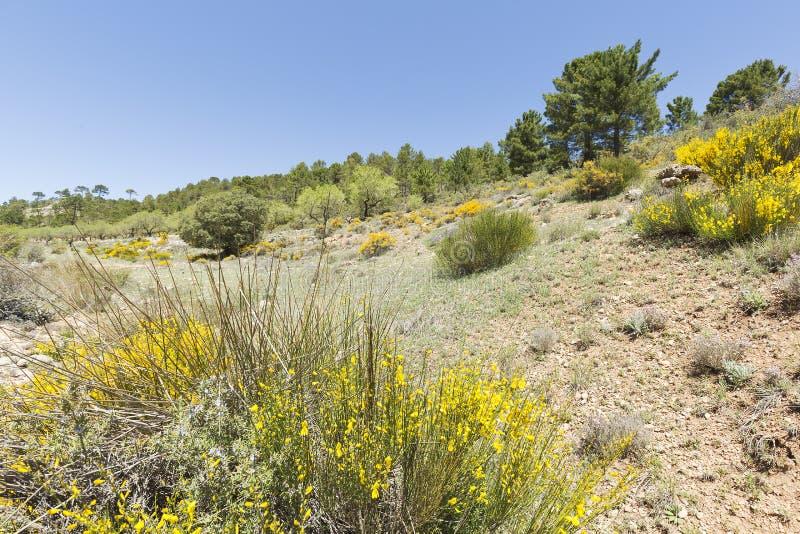 Krajobraz w cañadas De Haches de Arriba obrazy stock