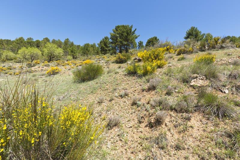 Krajobraz w cañadas De Haches de Arriba zdjęcia royalty free