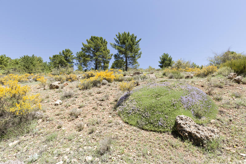 Krajobraz w cañadas De Haches de Arriba zdjęcie stock