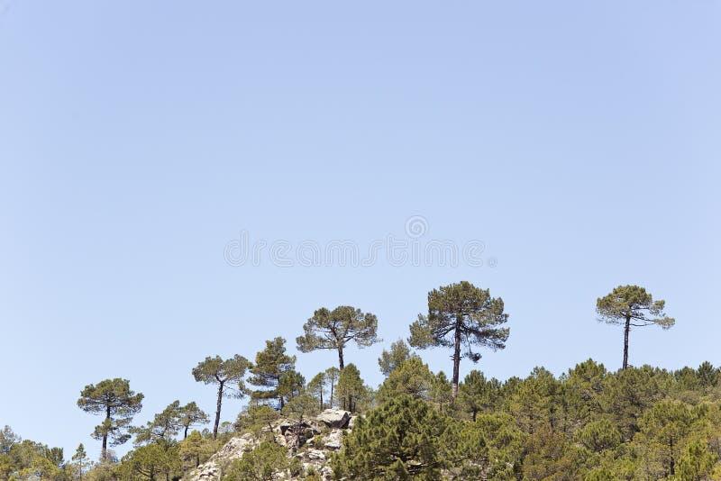 Krajobraz w cañadas De Haches de Arriba obrazy royalty free