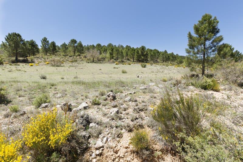 Krajobraz w cañadas De Haches de Arriba fotografia stock