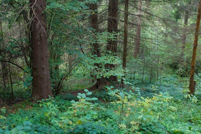 Krajobraz w Carpathians w auturmn obrazy stock