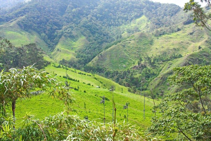 Krajobraz w Cocora dolinie z wosk palmą między mounta, zdjęcie stock