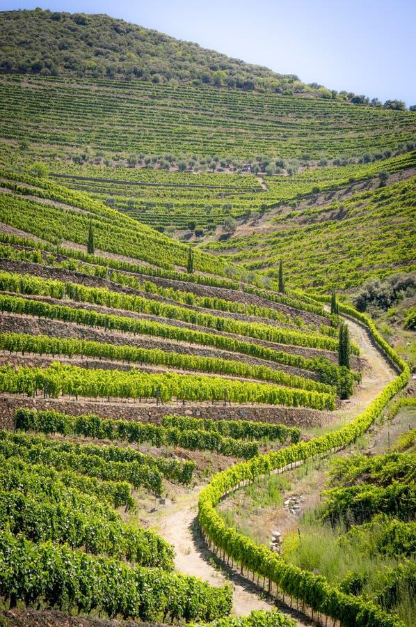 Krajobraz w Douro dolinie obrazy stock