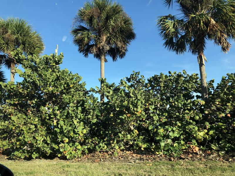 Krajobraz w Floryda zdjęcia stock