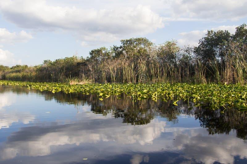Krajobraz w Floryda zdjęcie royalty free