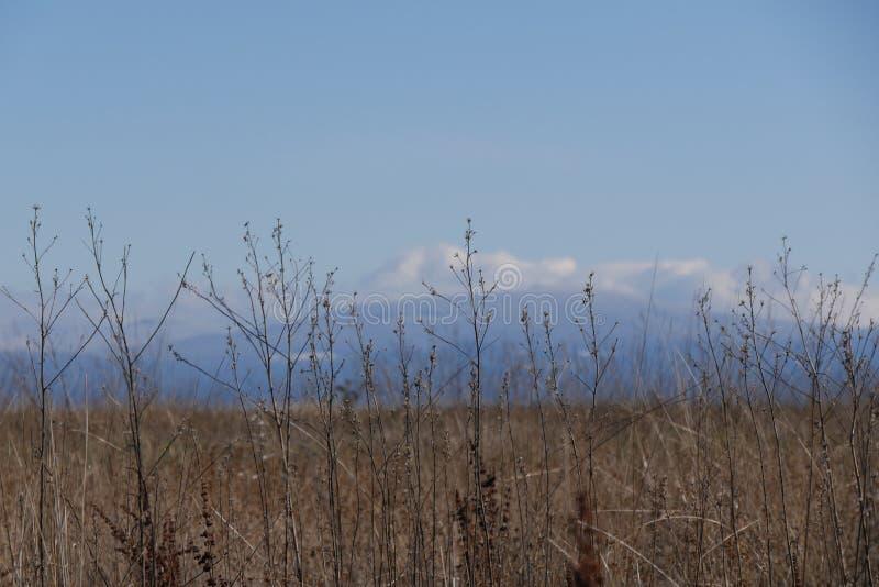 Krajobraz w Oregon obraz royalty free