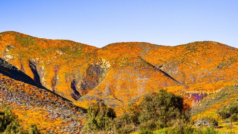 Krajobraz w piechura jarze podczas superbloom, Kalifornia maczki zakrywa doliny halne granie i, Jeziorny Elsinore, fotografia royalty free