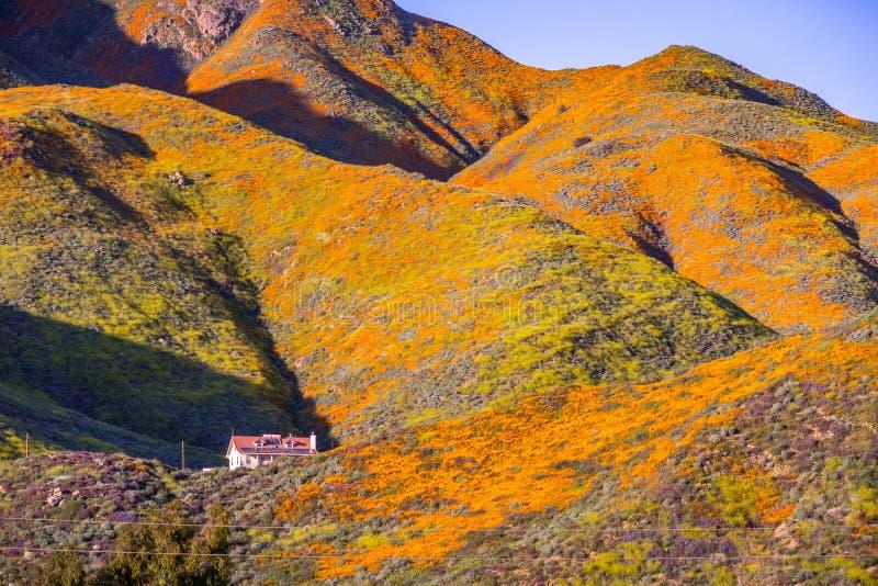 Krajobraz w piechura jarze podczas superbloom, Kalifornia maczki zakrywa doliny halne granie i, Jeziorny Elsinore, zdjęcia royalty free