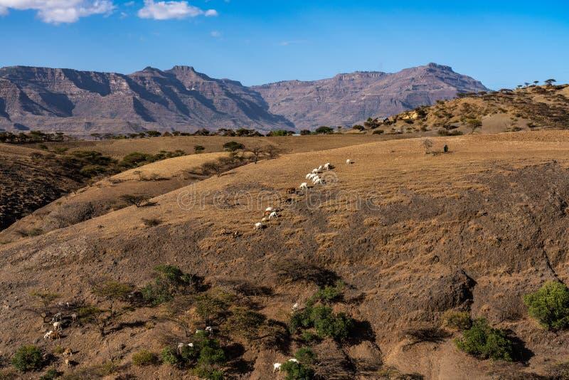 Krajobraz w ?redniog?rzach Lalibela, Etiopia fotografia stock
