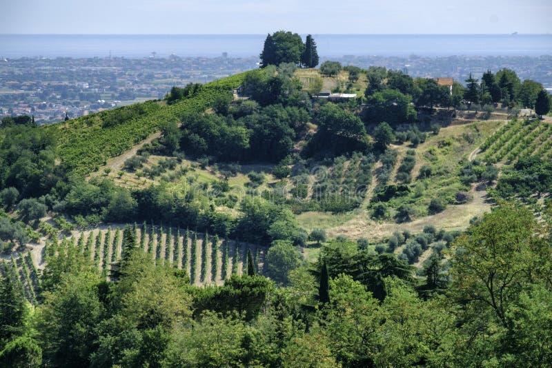 Krajobraz w Romagna przy latem: winnicy fotografia royalty free