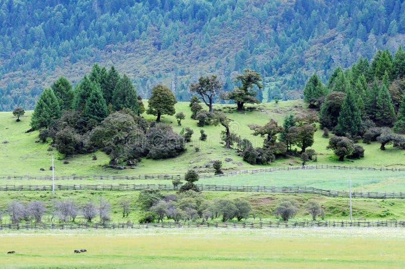 Krajobraz w Tybet zdjęcia stock