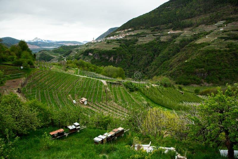 Krajobraz winnica w Włochy Wiosna krajobraz z zielonymi winnicami Włoszczyzna krajobraz z winogradami na zboczu fotografia stock