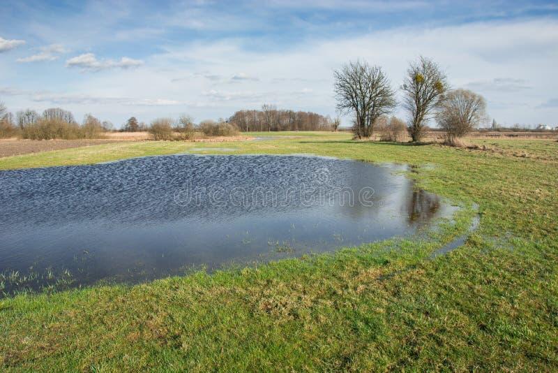 Krajobraz wiosny łąka, woda po deszczu, drzewa i pogodny niebo, obrazy royalty free