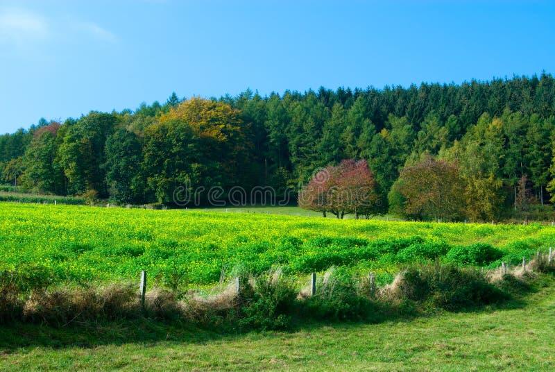 krajobraz wsi zdjęcia royalty free