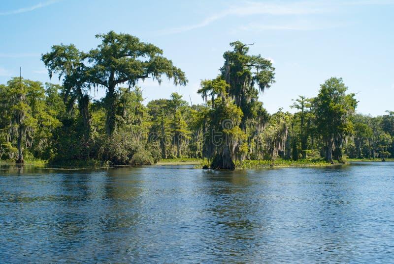Krajobraz z drzewami, Hiszpańskim mech i Wakulla rzeką przy Wakulla wiosnami, Floryda, usa fotografia stock