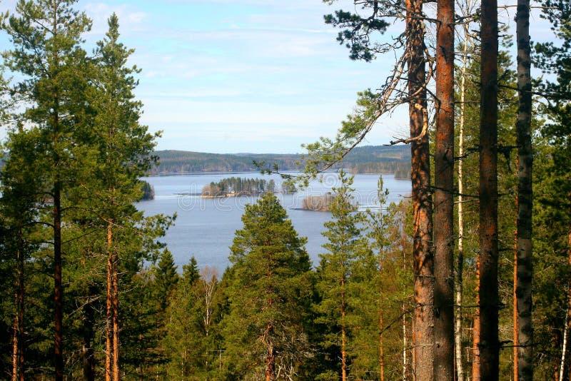 Krajobraz z drzewami i jeziorem zdjęcie royalty free