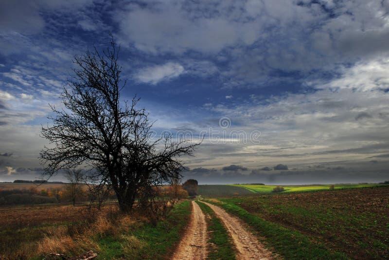 Krajobraz z drzewem obrazy royalty free