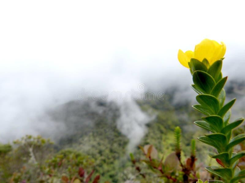 Krajobraz z górami, chmurami i żółtym kwiatem, obrazy royalty free