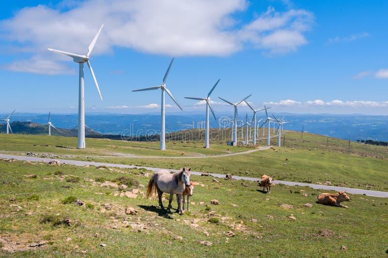 Krajobraz z koniami, silnikami wiatrowymi dla zasilania elektrycznego pokolenia, niebieskim niebem i chmurami, obrazy stock