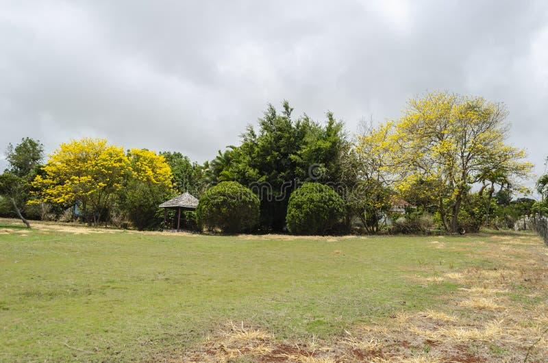 Krajobraz Z Kwitnąć Tabebuia drzewa obrazy royalty free