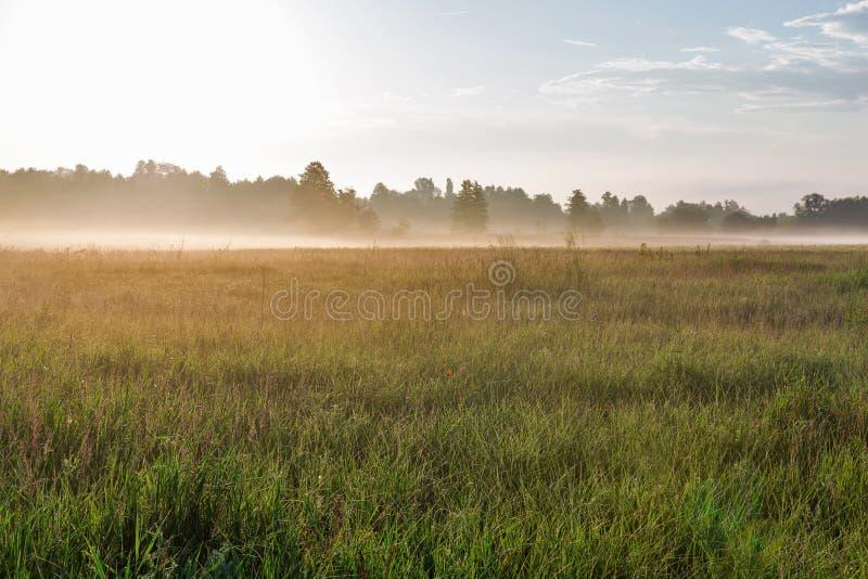 Krajobraz z mgiełką nad Ros rzeką, Ukraina zdjęcie royalty free