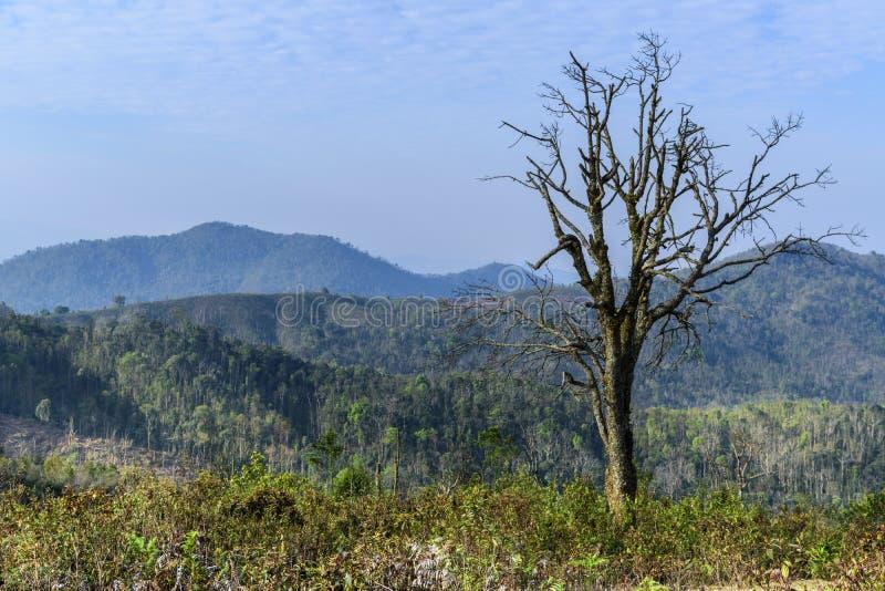 Krajobraz z nieżywym drzewem po zimy w Laos obrazy stock