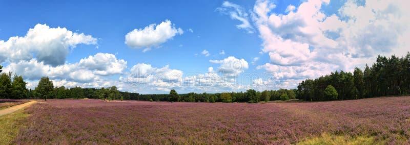 Krajobraz z niebieskim niebem, chmurami, drzewami i heide łąką, i obraz royalty free