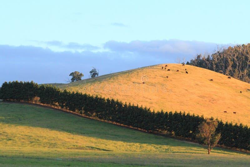 Krajobraz z niebieskim niebem i górami fotografia stock