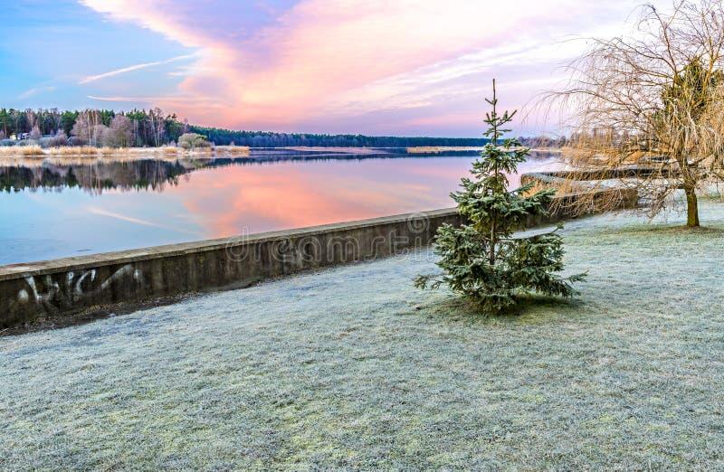 Krajobraz z osamotnioną frosted jodłą blisko rzeki fotografia royalty free