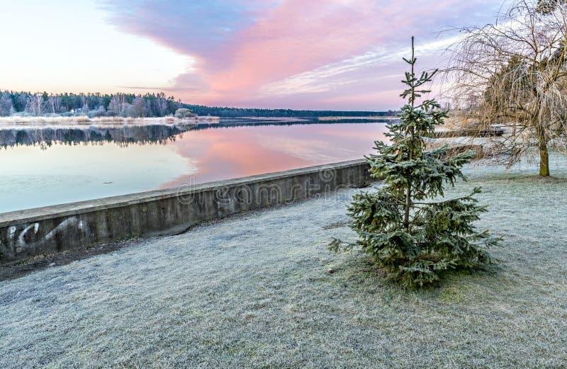 Krajobraz z osamotnioną frosted jodłą blisko rzeki obraz royalty free