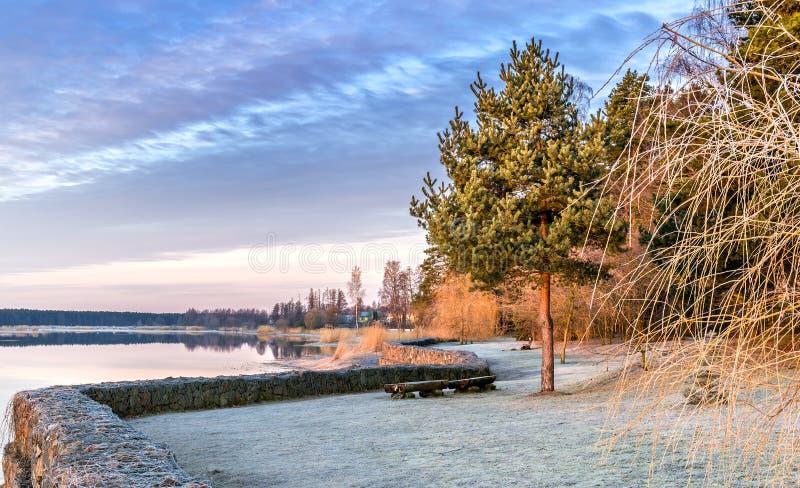 Krajobraz z osamotnioną starą sosną blisko rzeki fotografia royalty free