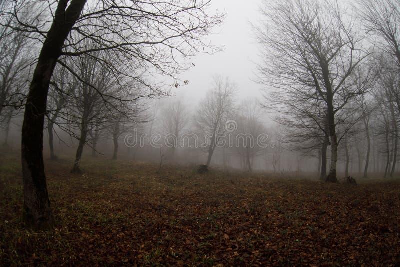 Krajobraz z piękną mgłą w lesie na wzgórzu lub ślad przez tajemniczego zima lasu z jesień liśćmi na ziemi Droga obrazy royalty free