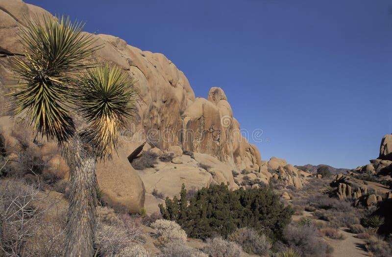 Krajobraz z rockowymi formacjami, Joshua drzewa park narodowy, Calif zdjęcie royalty free