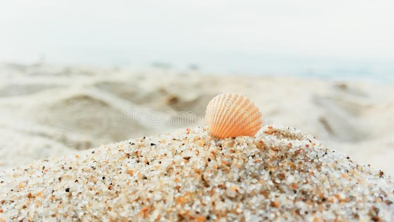 Krajobraz z skorupą na plaży fotografia royalty free