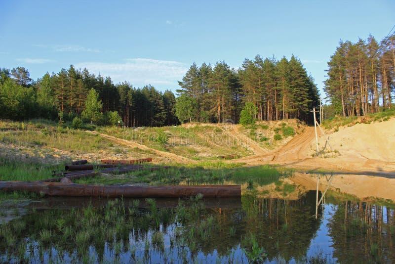 Krajobraz z sosnowym lasem obrazy stock