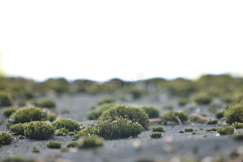 Krajobraz z starym mech, liszaj Naturalny tło z szarość brudzi mech, trawa, liszaju dorośnięcie na ziemi Wizerunek dla desktop obraz royalty free