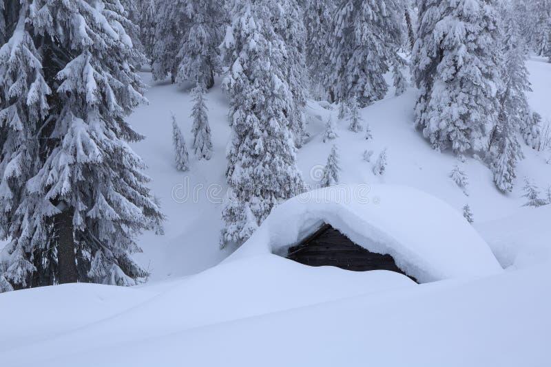 Krajobraz z starymi drewnianymi budami Na gazonie zakrywającym z śniegiem nalewał z płatek śniegu w mroźnej zimie ładni drzewa st obraz royalty free