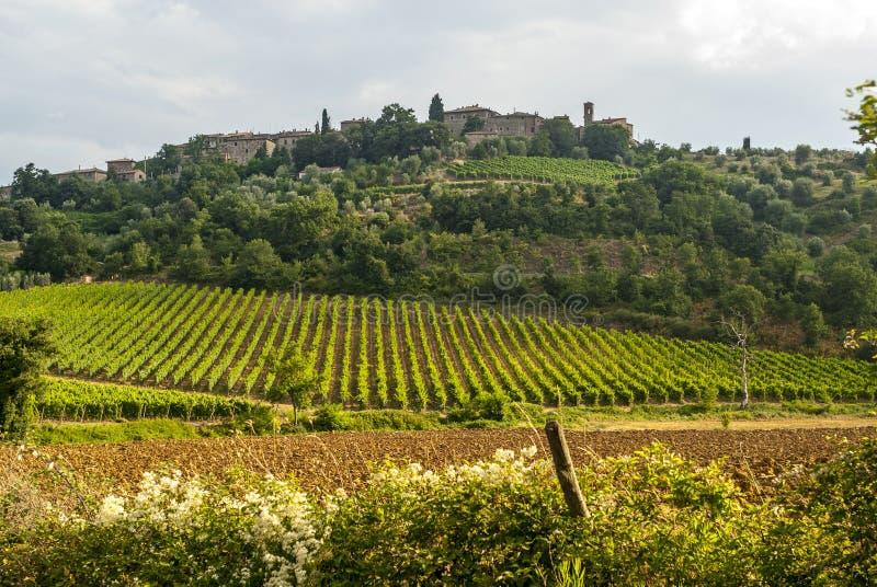Krajobrazowy pobliski sant'Antimo (Tuscany) obrazy royalty free