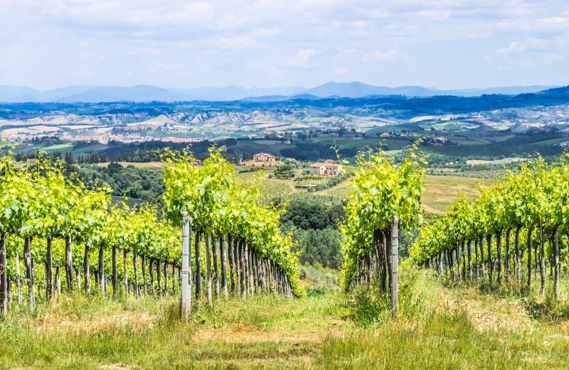 Krajobraz z winnicami, Tuscany, Włochy fotografia royalty free