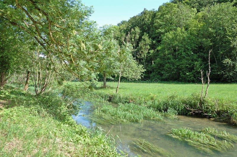 Krajobraz z zatoczką, łąką i drzewami, zdjęcie stock