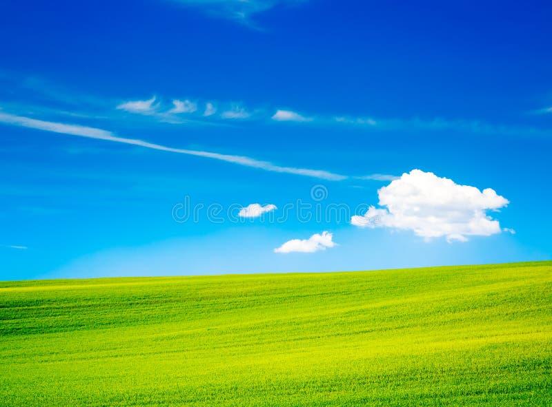 Krajobraz z zieleni polem i niebieskie niebo w lecie fotografia royalty free