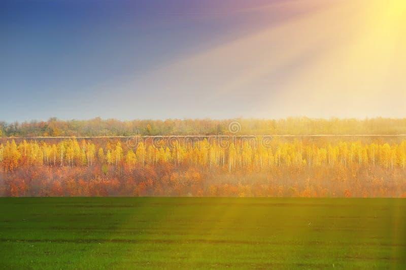 Krajobraz - zespołu pole z zieloną trawą, jesień lasem i niebieskim niebem, zdjęcie royalty free