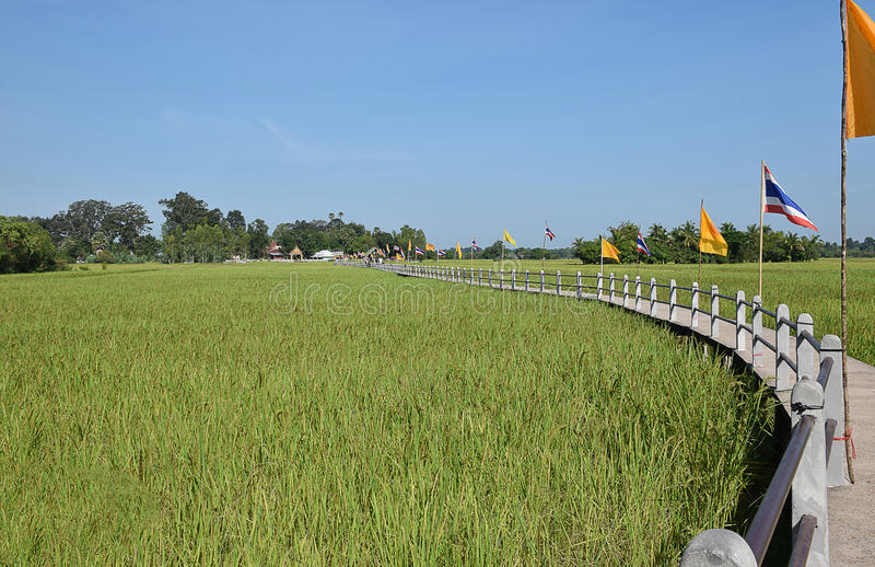 Krajobraz zieleni irlandczyków ryż pola obrazy stock
