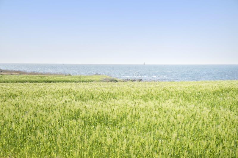 Download Krajobraz Zielony Jęczmienia Pole Zdjęcie Stock - Obraz złożonej z uprawa, fielder: 53787330