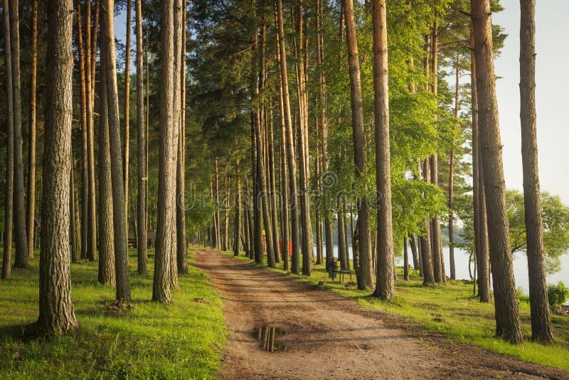 Krajobraz zielony lato las z drogą na brzeg jezioro Sosna park blisko rzeki obrazy stock
