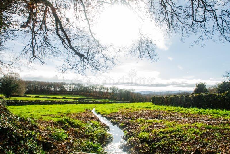 Krajobraz zielony pole z tłem drzewa, z rzeką między zdjęcia royalty free